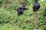 10 Entebbe Zoo (236)