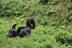 10 Entebbe Zoo (238)