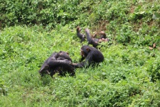 10 Entebbe Zoo (239)
