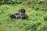 10 Entebbe Zoo (240)