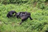 10 Entebbe Zoo (243)
