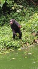 10 Entebbe Zoo (247)