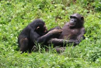 10 Entebbe Zoo (250)
