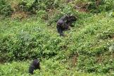 10 Entebbe Zoo (257)