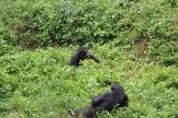 10 Entebbe Zoo (260)