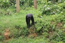 10 Entebbe Zoo (261)