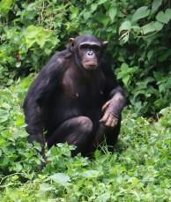 10 Entebbe Zoo (263)