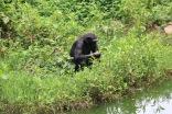 10 Entebbe Zoo (271)
