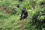 10 Entebbe Zoo (275)