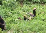 10 Entebbe Zoo (281)