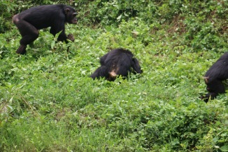 10 Entebbe Zoo (282)