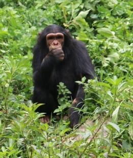 10 Entebbe Zoo (285)