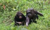 10 Entebbe Zoo (287)