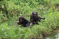 10 Entebbe Zoo (288)