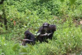 10 Entebbe Zoo (291)