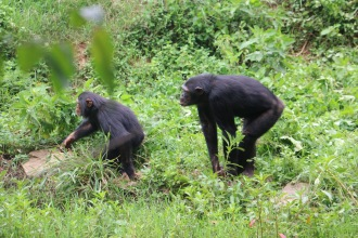 10 Entebbe Zoo (292)