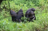 10 Entebbe Zoo (294)