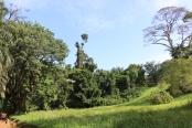 10b Entebbe Gardens (106)