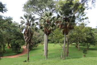 10b Entebbe Gardens (12)