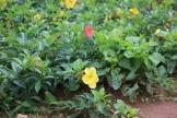 10b Entebbe Gardens (125)