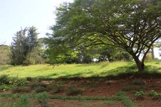 10b Entebbe Gardens (127)