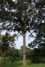 10b Entebbe Gardens (13)