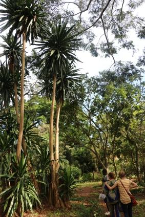 10b Entebbe Gardens (137)