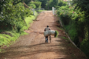 10b Entebbe Gardens (139)