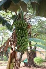 10b Entebbe Gardens (140)
