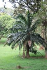 10b Entebbe Gardens (15)