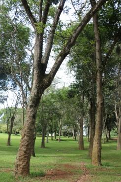 10b Entebbe Gardens (37)