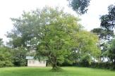 10b Entebbe Gardens (6)