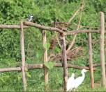 10b Entebbe Gardens (74)