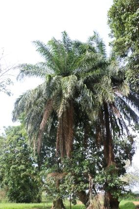 10b Entebbe Gardens (96)