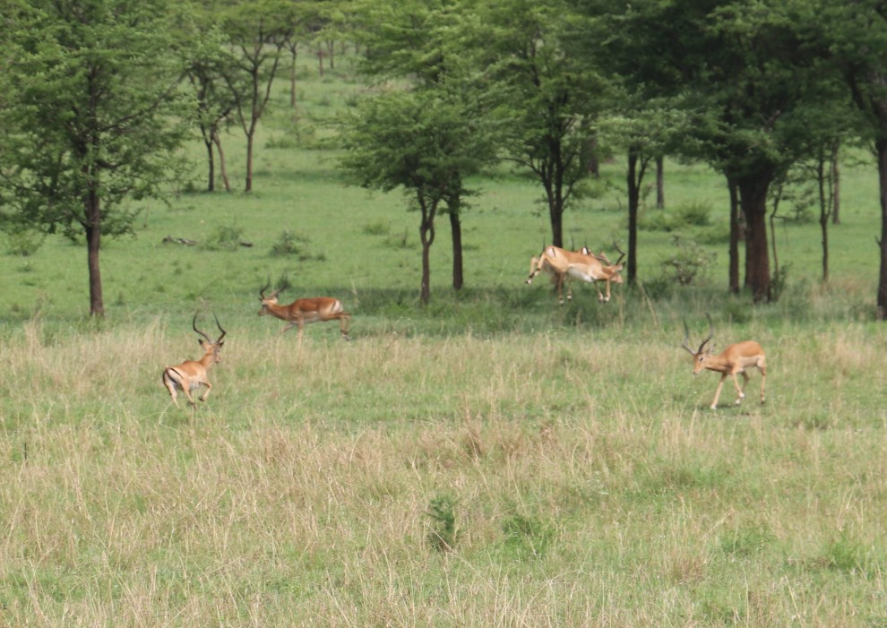 Day 1 Serengeti (266)