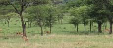 Day 1 Serengeti (268)-6