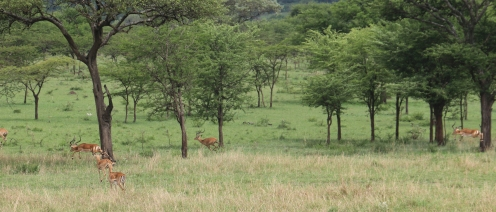 Day 1 Serengeti (268)-6
