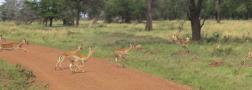 Day 1 Serengeti (277)-15