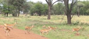 Day 1 Serengeti (279)-17