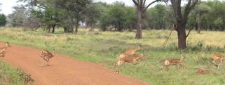 Day 1 Serengeti (282)-20