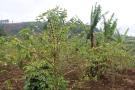 07b Sipi Falls (120)