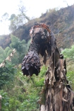 07b Sipi Falls (149)