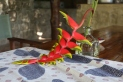 Crab Claw Plant