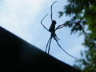 Yok Don - Spider