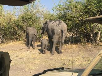 Elephant Trio