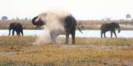 Elephant Dust Trio