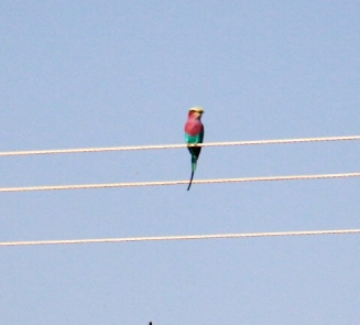 Roller on a Wire