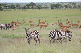 18-20 serengeti (1102)