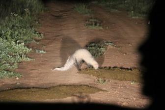 18-20 serengeti (230)