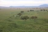 18-20 serengeti (294)